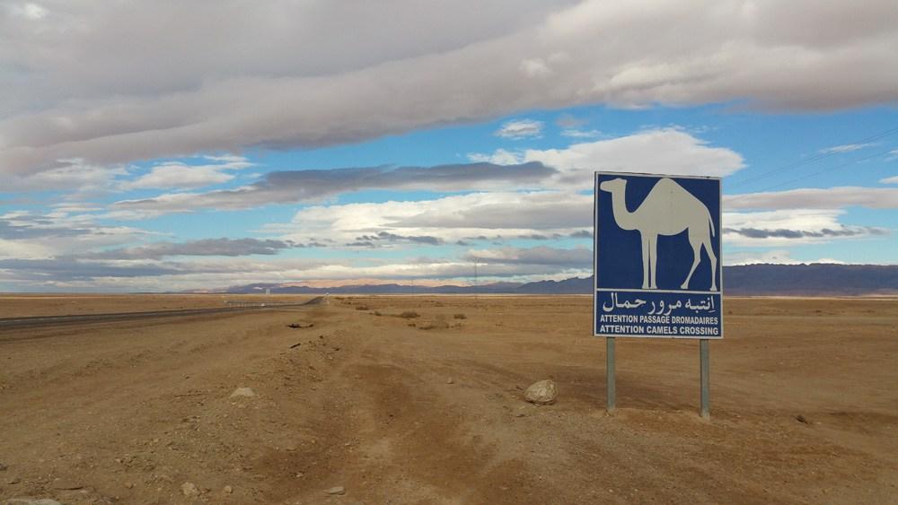 Photographie d'un panneau d'avertissement bleu illustré avec un dromadaire dans le désert du Sahara en Tunisie.