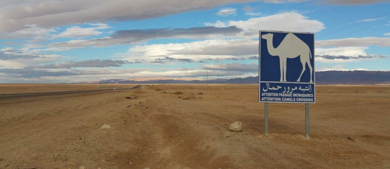 Picture of a blue warning sign featuring a camel in the Sahara desert in Tunisia.